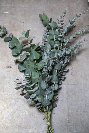 Bild von Eukalyptus