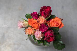 Bild von Rosen in rot, rosa, orange