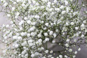 Bild zeigt Blumen