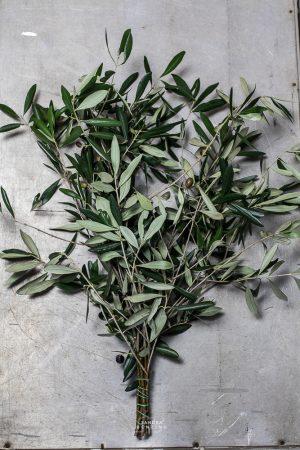 Bild zeigt Olivenzweige