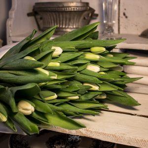 Bild zeigt Tulpe weiß